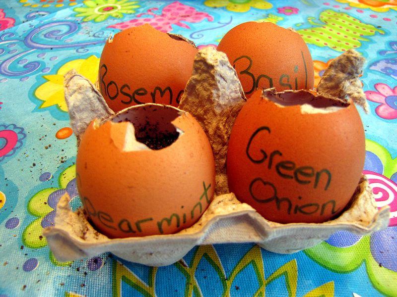 Seed starter 4 eggs