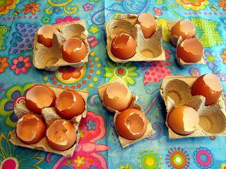 Seed starter empty eggs