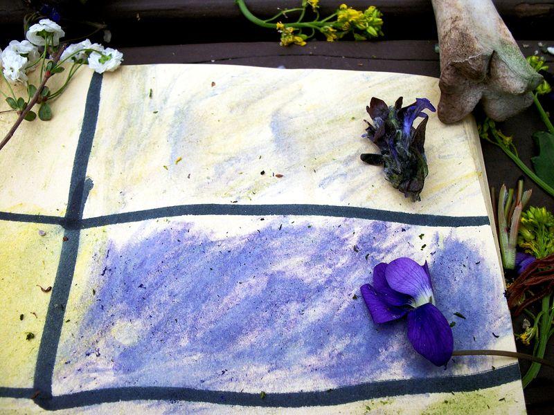 NC purple