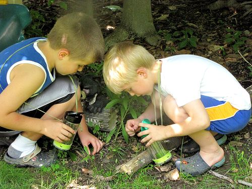 Bug catcher boys in woods